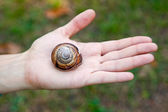 Big snail on the human hand — Stock fotografie