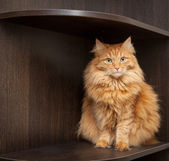 Cat sit on a shelf — Stock Photo