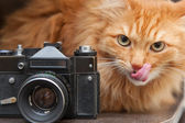 Cat and vintage photo camera — Stock Photo
