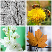 Nature in winter, spring, summer and autumn.Collage. — Stock Photo