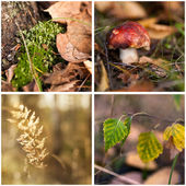 Bright autumn collage. — Stock Photo