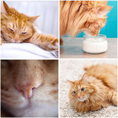 Fluffy funny cat — Stock Photo