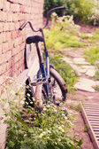 Bush with daisies and old bike — Stock Photo