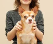 Portrait of a beautiful young woman with chihuahua dog — Stock Photo