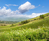 Bright beautiful summer landscape with blue sky in a green valle — Stock Photo