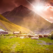 Flock of sheep grazing in a mountain valley — Stock Photo