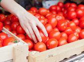 Human hand takes a tomato  — Stock Photo