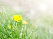 Spring flowers in the forest in soft focus — Foto de Stock