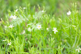 Spring flowers in the forest in soft focus — Stock Photo