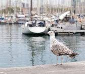 Seagull on a background of the port — Stock fotografie
