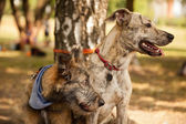 Two funny mixed breed dogs in the park — Zdjęcie stockowe