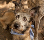 Portrait of a cute mixed breed dog — Foto Stock