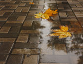 Yellow autumn leaves in a puddle. — Stock Photo