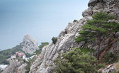 Pine growing on a rock on the sea background — Stock Photo