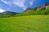 Pasto en las montañas de san juan en colorado — Foto de Stock
