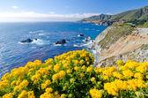 Vista pittoresque sur la route d'état californie 1 — Photo