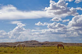 Horses grazing in Utah near the Four Corners area of the USA. — Stock Photo
