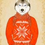 Husky Dog Wears Jacquard Sweater — Stock Vector #37530077