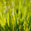 Grass. — Stock Photo