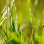 Grass. — Stock Photo