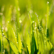 Grass. — Stock Photo #15388927
