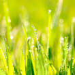 Grass. — Stock Photo #15388951