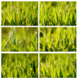 Grass. set — Stock Photo