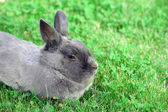 Rabbit bunny in green grass — Stock Photo