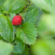 strawberry — Stock Photo #28329459