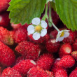 Strawberries berry — Stock Photo #28329827