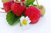 Truskawki jagody na białym tle z kwiatami — Zdjęcie stockowe