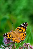 Butterfly on the flowers — Stock Photo