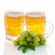 Two glasses of beer and hop plant — Stock Photo