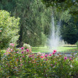 Beautiful botanical garden — Stock Photo