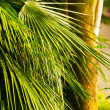 The palm leaf in tropical forests — Stock Photo