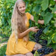 Girl picking ripe grapes in vineyard — Stock Photo