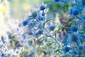 Green plants — Stock Photo