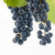 Bunch of fresh blue grapes isolated on white — Stock Photo #31671085