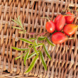 Red ripe rose hips — 图库照片