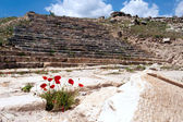 Poppy flowers in Pamukkale — Stock Photo