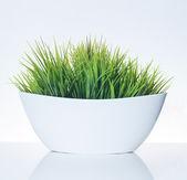 трава в горшок — Стоковое фото