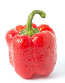 Wet red paprika — Stockfoto
