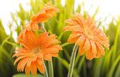 Wet orange flowers — Stock Photo