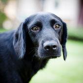 可爱的狗 — 图库照片