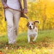 Dog walk — Stock Photo