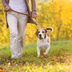 Dog walk — Stock Photo