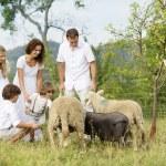 Family feeding animal on the farm — Stock Photo #36987153