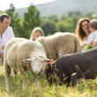 Stock Photo: Family feeding animal on farm