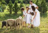 Family feeding animal on the farm — Zdjęcie stockowe