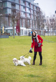 Winter portrait of pregnant woman walking dogs — Stock Photo